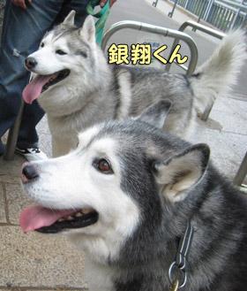 トリュフ&銀ちゃん