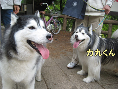 ポトフ&リキちゃん