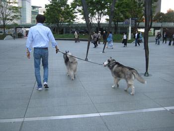 お散歩再開