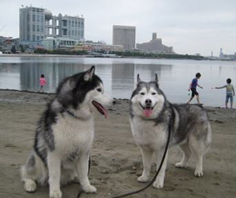 お台場海浜公園