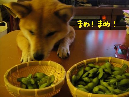 ichi114o.jpg