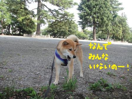 ichi115a.jpg