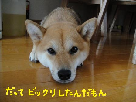 ichi115n.jpg