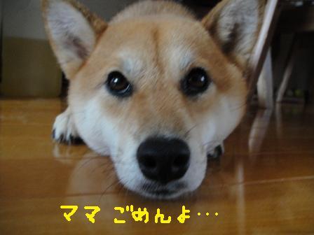 ichi115o.jpg