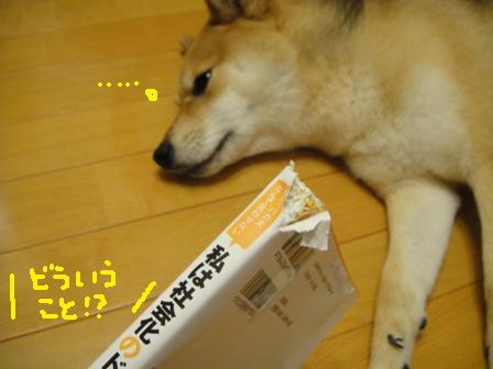 ichi116c.jpg