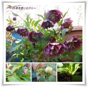 繧ッ繝ェ繝ュ繝シ濶イ縲・シ。_convert_20120117172431