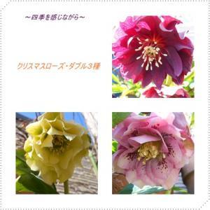 繧ッ繝ェ繝ュ繝シ繝?繝悶Ν繝サ・鍋ィョ_convert_20120220124818