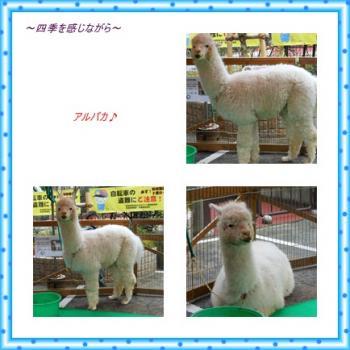 繧「繝ォ繝代き笙ェ_convert_20120318003444