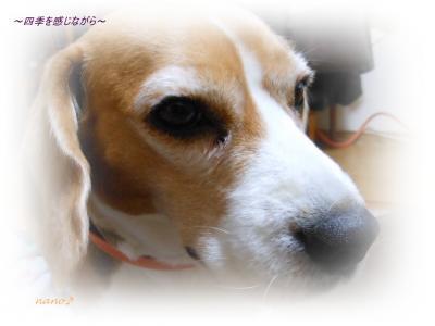DSCN0490_convert_20120114233011.jpg