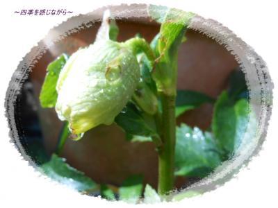 DSCN0674_convert_20120126130632.jpg