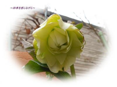 DSCN0750_convert_20120208233212.jpg