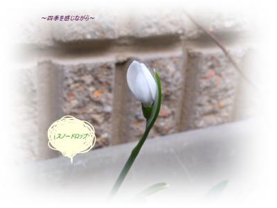 DSCN0854_convert_20120220125031.jpg