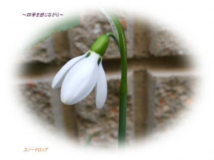 DSCN0892_convert_20120224224241.jpg