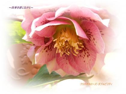 DSCN0908_convert_20120224224520.jpg