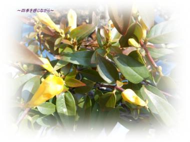 DSCN0916_convert_20120224224809.jpg