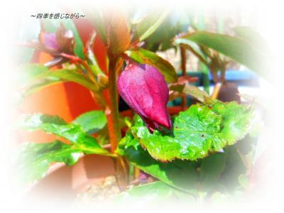 DSCN0975_convert_20120227155702.jpg