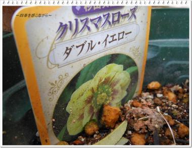 DSCN0979_convert_20120227155859.jpg