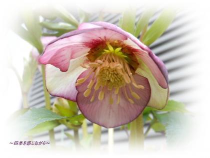 DSCN1015_convert_20120303123303.jpg