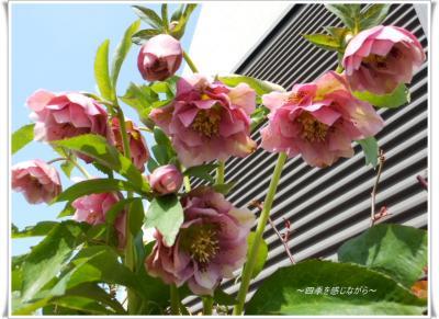 DSCN1019_convert_20120303123431.jpg