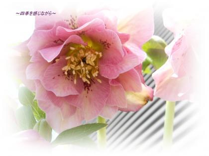 DSCN1020_convert_20120303123456.jpg