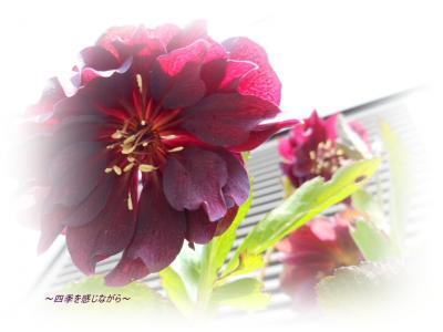 DSCN1022_convert_20120303123545.jpg
