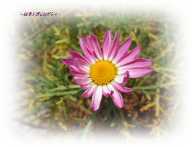DSCN1024_convert_20120303123650.jpg