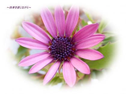 DSCN1030_convert_20120303123823.jpg