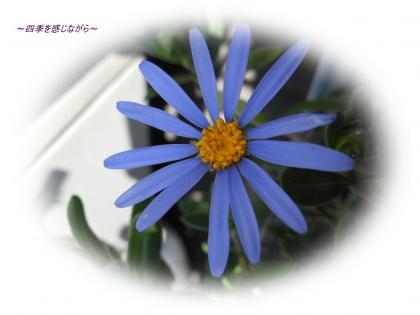 DSCN1037_convert_20120303124004.jpg
