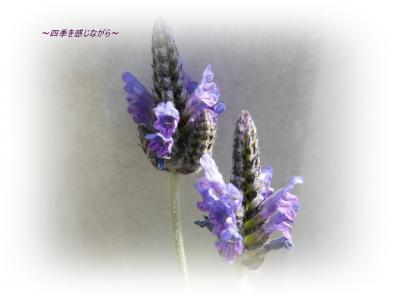 DSCN1041_convert_20120303124030.jpg
