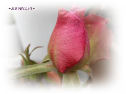 DSCN1063_convert_20120308123844.jpg