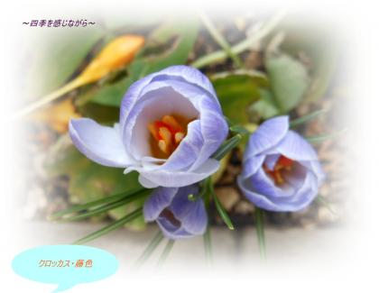 DSCN1095_convert_20120312112940.jpg
