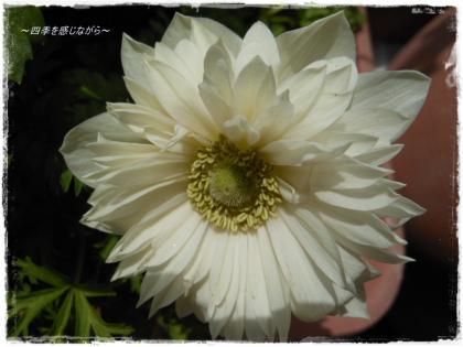 DSCN1207_convert_20120319180102.jpg