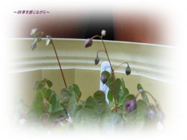 DSCN1347_convert_20120326135121.jpg