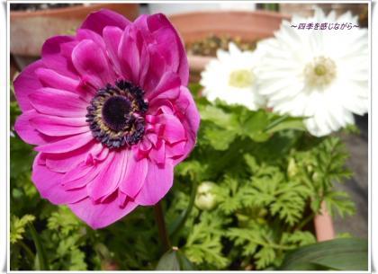 DSCN1355_convert_20120326135304.jpg
