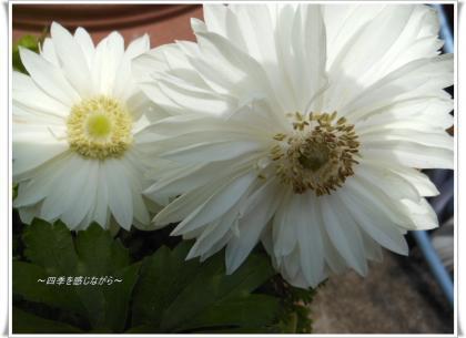 DSCN1357_convert_20120326135413.jpg