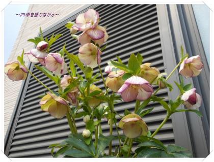 DSCN1371_convert_20120328181109.jpg