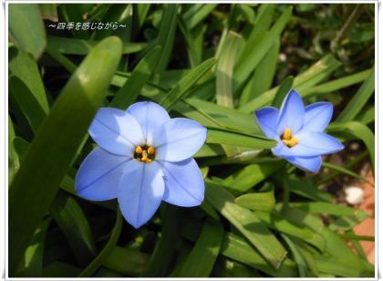 DSCN1391_convert_20120330112115.jpg