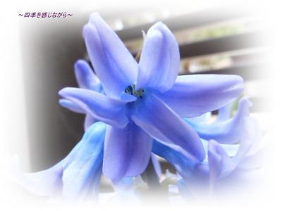 DSCN1502_convert_20120409000952.jpg