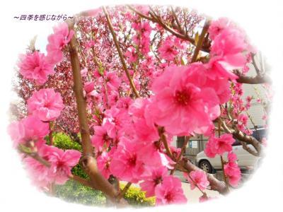 DSCN1722_convert_20120417154306.jpg