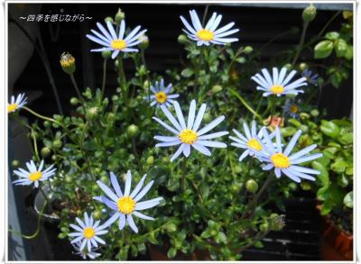 DSCN1760_convert_20120419140503.jpg