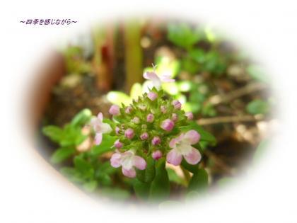 DSCN1812_convert_20120424113303.jpg