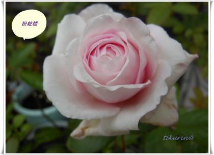 DSCN9981_convert_20111129225156.jpg
