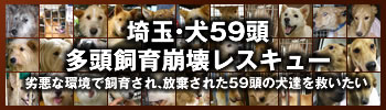 栗橋多頭飼い崩壊49頭+10頭
