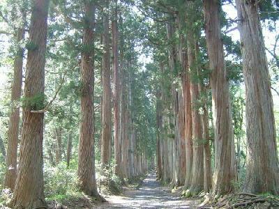 戸隠神社並木