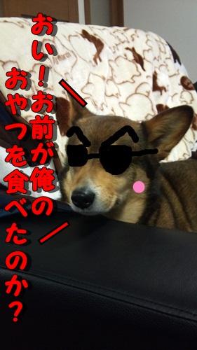DSC_0452_20110611162514.jpg
