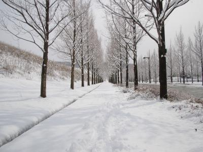 yukimichi_convert_20110630002219.jpg