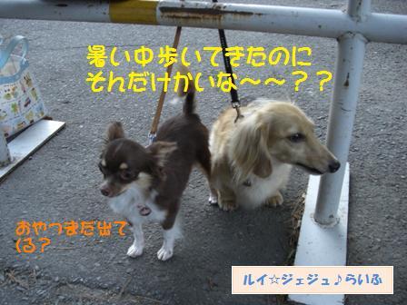 CIMG1478_20090714142527.jpg