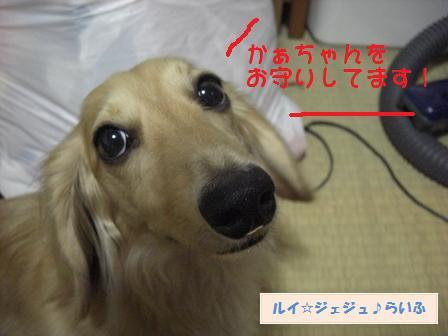 CIMG1640_20090717132645.jpg