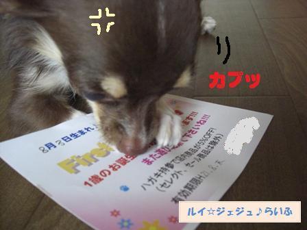 CIMG2139_20090804183626.jpg
