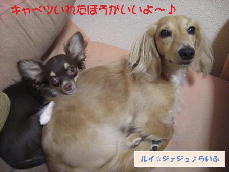 CIMG2215_20090811223105.jpg